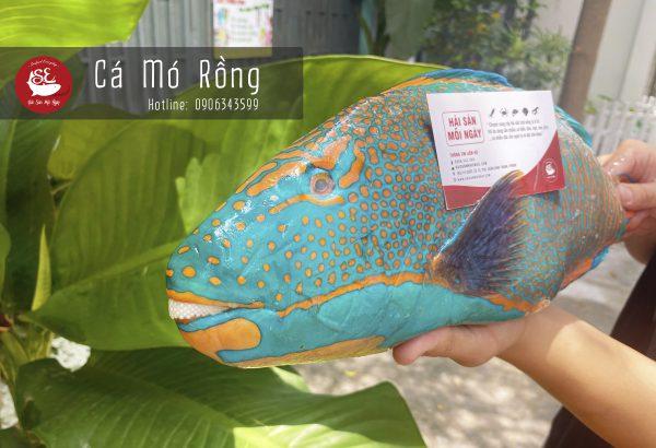 Cá mó rồng